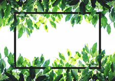 Groene bladeren met creatieve vierkante kaderlay-out Op witte achtergrond met exemplaarruimte Stock Foto's