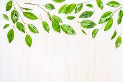 Groene bladeren met dauwdalingen, grens of patroon op witte houten achtergrond, hoogste mening Royalty-vrije Stock Fotografie