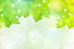 Groene bladeren met de abstracte onduidelijk beeld bokeh lente of de zomerachtergrond Royalty-vrije Stock Foto