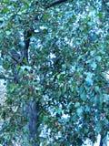 Groene bladeren met een heldere zon die door glanzen Royalty-vrije Stock Fotografie