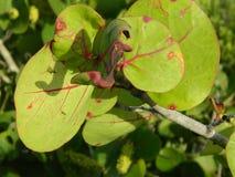 Groene Bladeren met gelezen adersstrand Stock Fotografie
