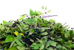 Groene bladeren met purpere bessen op geïsoleerde witte achtergrond Stock Afbeelding