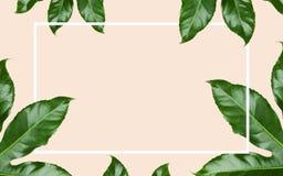 Groene bladeren met rechthoekig kader over beige Stock Foto's