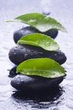 Groene bladeren met water op stenennegas royalty-vrije stock afbeelding