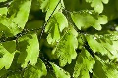 Groene bladeren met waterdalingen royalty-vrije stock afbeelding