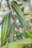 Groene bladeren met Web royalty-vrije stock foto