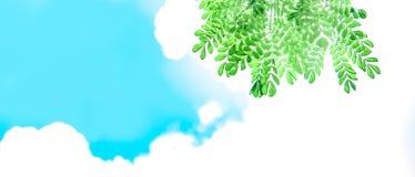 Groene bladeren met zonneschijn en mooie blauwe hemel en witte wolkenachtergrond Royalty-vrije Stock Fotografie