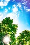 Groene bladeren met zonneschijn en mooie blauwe hemel en wolken Royalty-vrije Stock Fotografie
