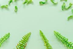 Groene bladeren minimaal op groene achtergrond royalty-vrije stock afbeeldingen