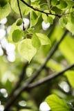Groene bladeren na de regen Royalty-vrije Stock Afbeeldingen