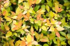 Groene bladeren na de regen Stock Foto