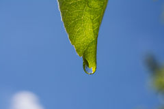 Groene bladeren na regen Stock Foto's