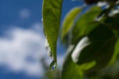 Groene bladeren na regen Royalty-vrije Stock Afbeeldingen