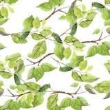 groene Bladeren Naadloos patroon watercolor Stock Afbeelding