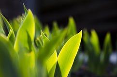 Groene bladeren onder de ochtendzon stock foto
