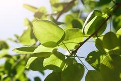 Groene bladeren onder heldere zonachtergrond royalty-vrije stock fotografie