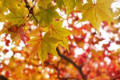 Groene bladeren onder rood Stock Afbeeldingen