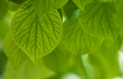 Groene bladeren, ondiepe nadruk stock foto's