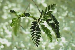 Groene bladeren op groene achtergrond royalty-vrije stock foto