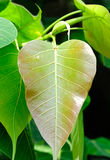 Groene bladeren op boom Royalty-vrije Stock Foto