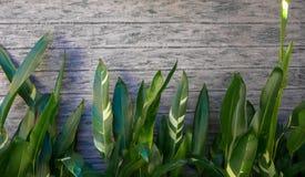 Groene bladeren op concrete achtergrond Royalty-vrije Stock Afbeelding