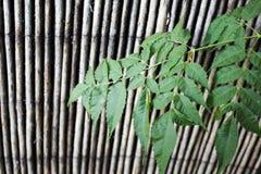 Groene bladeren op de achtergrond van de bamboetextuur Stock Afbeelding
