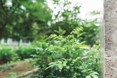 Groene bladeren op de boom Royalty-vrije Stock Afbeelding