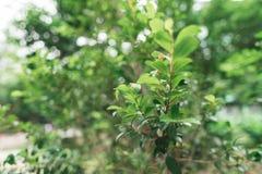 Groene bladeren op de boom Stock Foto's