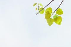 Groene bladeren op de lente of achtergrond Groene energie Stock Foto