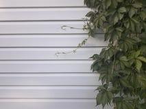 Groene bladeren op de muur royalty-vrije stock afbeelding