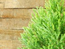 Groene bladeren op de oude houten achtergrond Stock Afbeelding