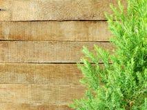 Groene bladeren op de oude houten achtergrond Royalty-vrije Stock Foto's