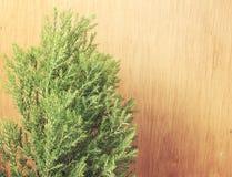 Groene bladeren op de oude houten achtergrond uitstekende filterskleur Royalty-vrije Stock Afbeelding