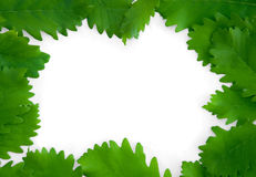 Groene bladeren op document frame geïsoleerde achtergrond Stock Foto