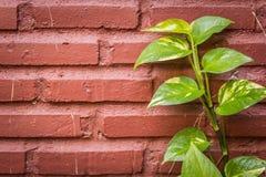 Groene bladeren op een bakstenen muur Stock Foto's