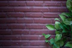 Groene bladeren op een bakstenen muur Stock Afbeeldingen