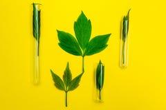 Groene bladeren op een gele achtergrond, homeopathie stock fotografie