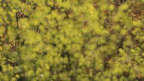 groene bladeren op een wind stock videobeelden