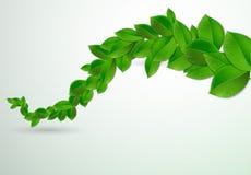 Groene bladeren op een witte achtergrond royalty-vrije illustratie