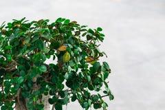 Groene bladeren op een witte te verfrissen achtergrond zich Stock Fotografie