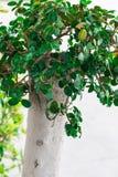Groene bladeren op een witte te verfrissen achtergrond zich Stock Foto