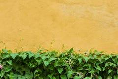 Groene bladeren op gele muur Royalty-vrije Stock Foto's