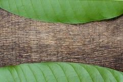 Groene bladeren op het hout Royalty-vrije Stock Foto's