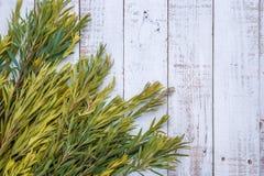 Groene bladeren op het oude houten achtergrond feestelijke aardkader B Royalty-vrije Stock Foto