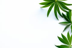 Groene bladeren op het recht op de witte prentbriefkaar als achtergrond royalty-vrije stock fotografie