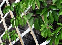Groene bladeren op het rooster royalty-vrije stock foto's