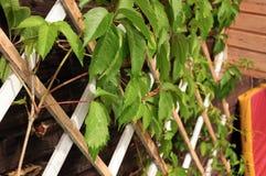 Groene bladeren op het rooster royalty-vrije stock afbeelding