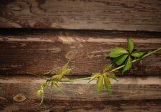 Groene bladeren op het rooster stock afbeeldingen