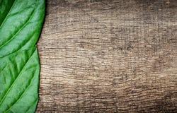 Groene bladeren op houten achtergrond Stock Fotografie
