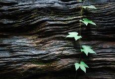 Groene bladeren op houten textuur Stock Afbeeldingen